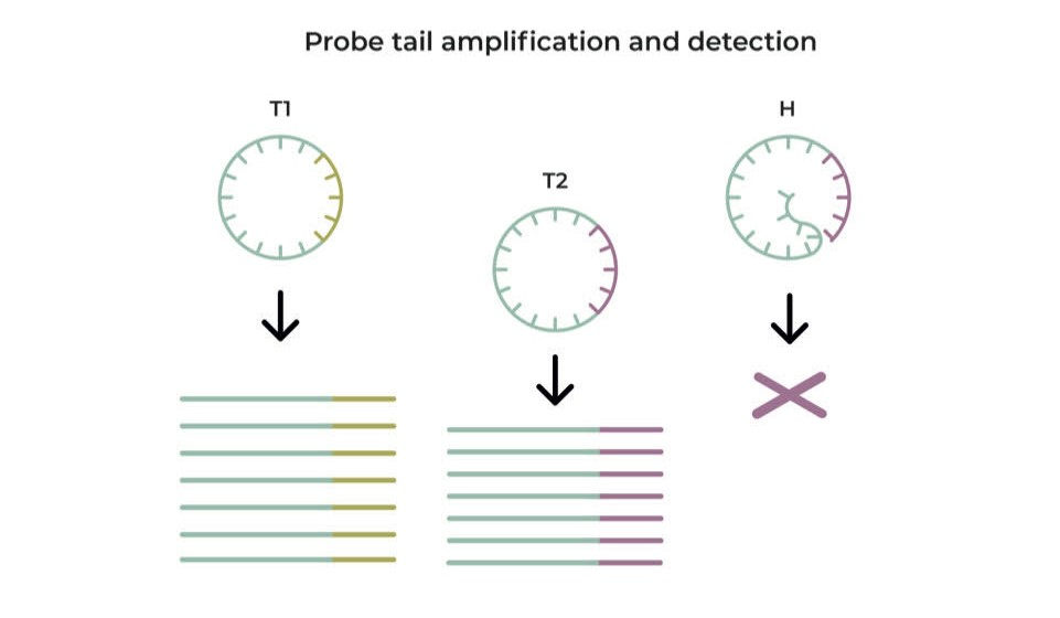 Probe tail amplification and detection